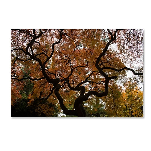 Trademark Fine Art Kurt Shaffer 'Brilliant Japanese Maple Abstract'  30 x 47 (KS01026-C3047GG)