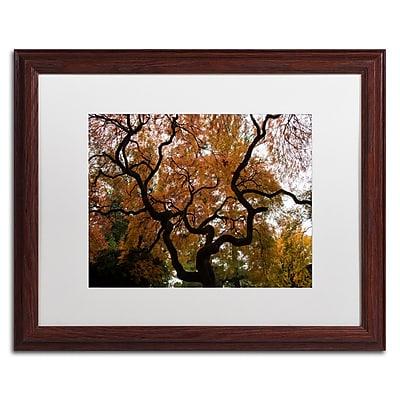 Trademark Fine Art Kurt Shaffer 'Brilliant Japanese Maple Abstract' 16 x 20 (KS01026-W1620MF)