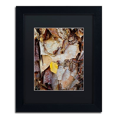 Trademark Fine Art Kurt Shaffer 'Paper Birch Abstract' 11 x 14 (KS0132-B1114BMF)