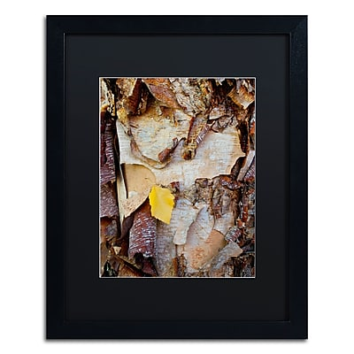 Trademark Fine Art Kurt Shaffer 'Paper Birch Abstract' 16 x 20 (KS0132-B1620BMF)
