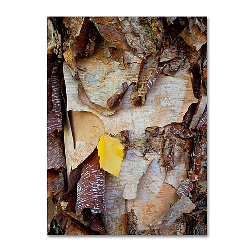 Trademark Fine Art Kurt Shaffer 'Paper Birch Abstract'  24 x 32 (KS0132-C2432GG)