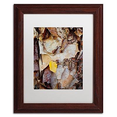 Trademark Fine Art Kurt Shaffer 'Paper Birch Abstract' 11 x 14 (KS0132-W1114MF)