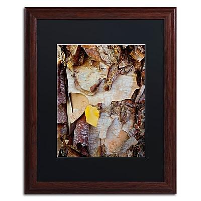 Trademark Fine Art Kurt Shaffer 'Paper Birch Abstract' 16 x 20 (KS0132-W1620BMF)