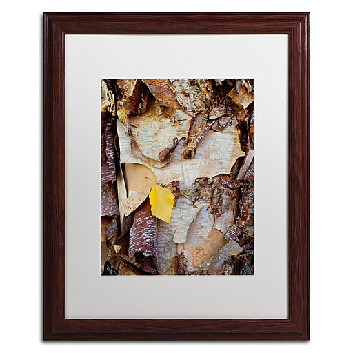 Trademark Fine Art Kurt Shaffer 'Paper Birch Abstract'  16 x 20 (KS0132-W1620MF)