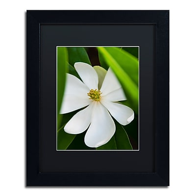 Trademark Fine Art Kurt Shaffer 'White Magnolia Flower' 11 x 14 (KS0133-B1114BMF)