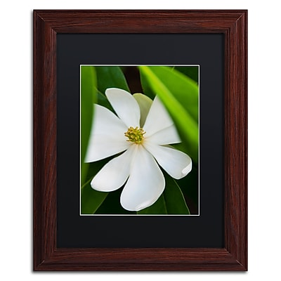 Trademark Fine Art Kurt Shaffer 'White Magnolia Flower' 11 x 14 (KS0133-W1114BMF)