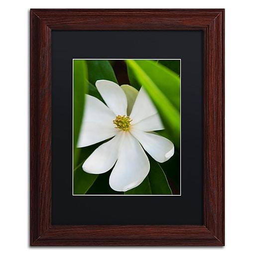 Trademark Fine Art Kurt Shaffer 'White Magnolia Flower'  11 x 14 (KS0133-W1114BMF)