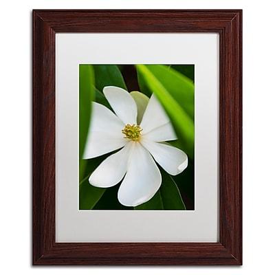 Trademark Fine Art Kurt Shaffer 'White Magnolia Flower' 11 x 14 (KS0133-W1114MF)