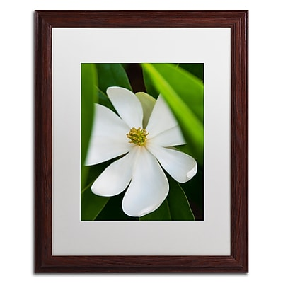Trademark Fine Art Kurt Shaffer 'White Magnolia Flower' 16 x 20 (KS0133-W1620MF)