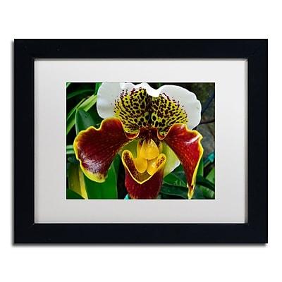 Trademark Fine Art Kurt Shaffer 'Alien Orchid' 11 x 14 (KS0163-B1114MF)