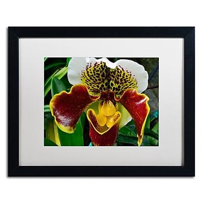 Trademark Fine Art Kurt Shaffer 'Alien Orchid' 16 x 20 (KS0163-B1620MF)