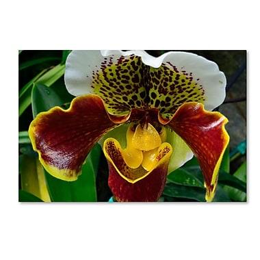 Trademark Fine Art Kurt Shaffer 'Alien Orchid' 30 x 47 (KS0163-C3047GG)