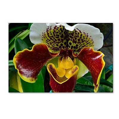 Trademark Fine Art Kurt Shaffer 'Alien Orchid' 22 x 32 (KS0163-C2232GG)