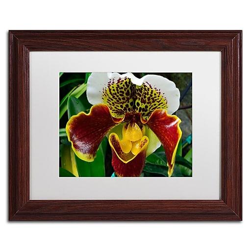 Trademark Fine Art Kurt Shaffer 'Alien Orchid'  11 x 14 (KS0163-W1114MF)