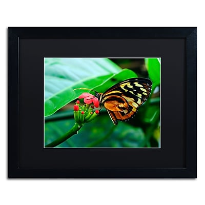 Trademark Fine Art Kurt Shaffer 'Cream Spotted Tigerwing' 16 x 20 (KS0166-B1620BMF)