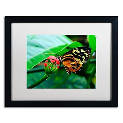 Trademark Fine Art Kurt Shaffer 'Cream Spotted Tigerwing' 16 x 20 (KS0166-B1620MF)