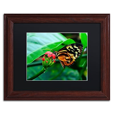 Trademark Fine Art Kurt Shaffer 'Cream Spotted Tigerwing' 11 x 14 (KS0166-W1114BMF)