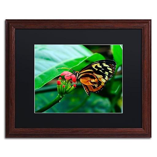 Trademark Fine Art Kurt Shaffer 'Cream Spotted Tigerwing'  16 x 20 (KS0166-W1620BMF)