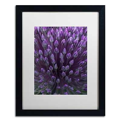 Trademark Fine Art Kurt Shaffer 'Alien Flower Pods' 16 x 20 (KS0173-B1620MF)