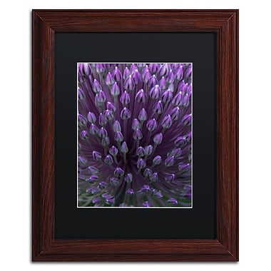 Trademark Fine Art Kurt Shaffer 'Alien Flower Pods' 11 x 14 (KS0173-W1114BMF)