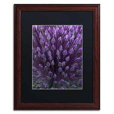 Trademark Fine Art Kurt Shaffer 'Alien Flower Pods' 16 x 20 (KS0173-W1620BMF)