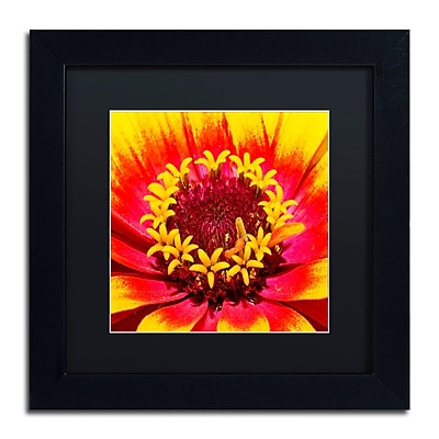 Trademark Fine Art Kurt Shaffer 'Floral Mass Coronal Ejection' 11 x 11 (KS0179-B1111BMF)