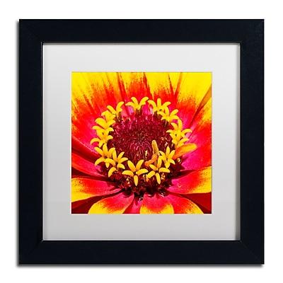Trademark Fine Art Kurt Shaffer 'Floral Mass Coronal Ejection' 11 x 11 (KS0179-B1111MF)
