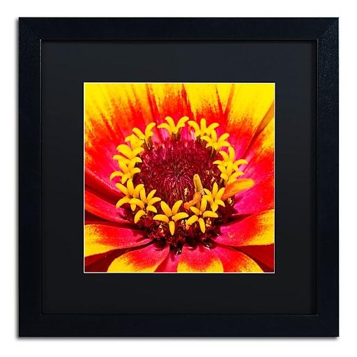 Trademark Fine Art Kurt Shaffer 'Floral Mass Coronal Ejection'  16 x 16 (KS0179-B1616BMF)