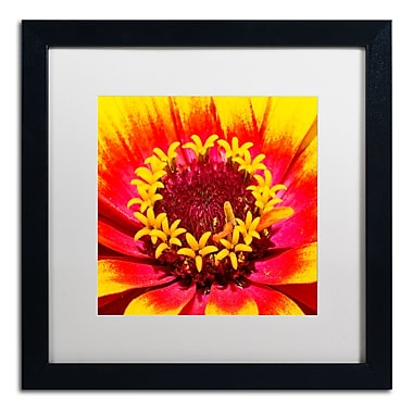 Trademark Fine Art Kurt Shaffer 'Floral Mass Coronal Ejection' 16 x 16 (KS0179-B1616MF)