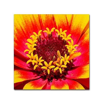 Trademark Fine Art Kurt Shaffer 'Floral Mass Coronal Ejection' 35 x 35 (KS0179-C3535GG)