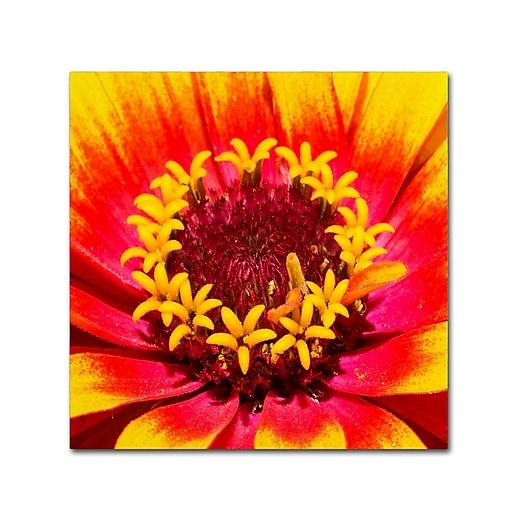 Trademark Fine Art Kurt Shaffer 'Floral Mass Coronal Ejection'  14 x 14 (KS0179-C1414GG)
