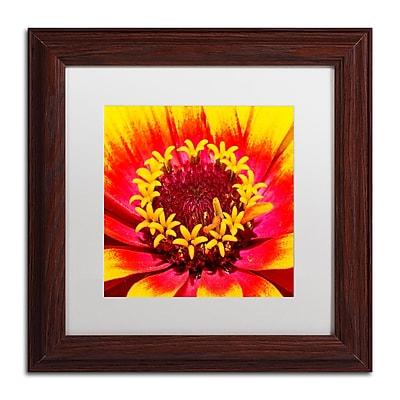 Trademark Fine Art Kurt Shaffer 'Floral Mass Coronal Ejection' 11 x 11 (KS0179-W1111MF)