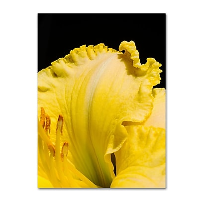 Trademark Fine Art Kurt Shaffer 'Day Lily Abstract' 14 x 19 (KS0180-C1419GG)