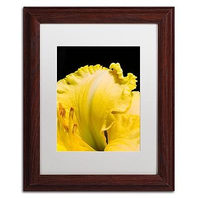 Trademark Fine Art Kurt Shaffer 'Day Lily Abstract' 11 x 14 (KS0180-W1114MF)