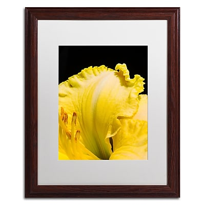 Trademark Fine Art Kurt Shaffer 'Day Lily Abstract' 16 x 20 (KS0180-W1620MF)