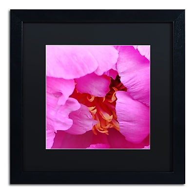 Trademark Fine Art Kurt Shaffer 'Tree Peonie Opening' 16 x 16 (KS0187-B1616BMF)
