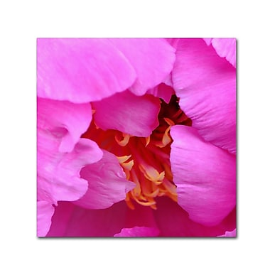 Trademark Fine Art Kurt Shaffer 'Tree Peonie Opening' 14 x 14 (KS0187-C1414GG)