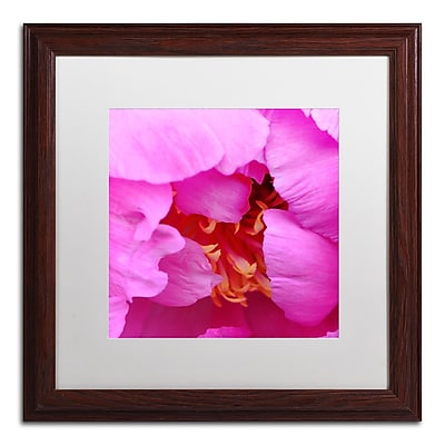 Trademark Fine Art Kurt Shaffer 'Tree Peonie Opening' 16 x 16 (KS0187-W1616MF)