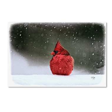 Trademark Fine Art Lois Bryan 'A Ruby in the Snow' 22 x 32 (LBR0237-C2232GG)