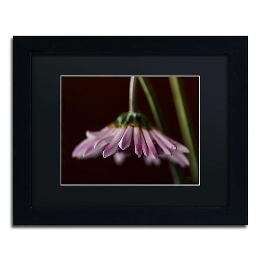 Trademark Fine Art Lois Bryan 'Drooping Flower'  11 x 14 (886511639928)
