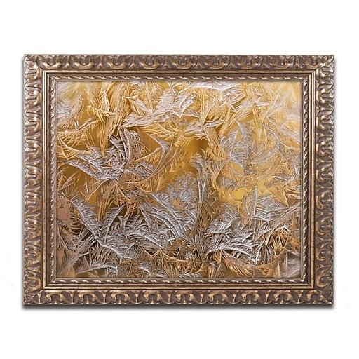 "Trademark Global Lois Bryan 'Frosted Filagree' 16"" x 20"" Ornate Framed Art (LBR0261-G1620F)"