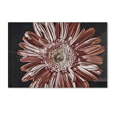 Trademark Fine Art Lois Bryan 'Silvery Pink' 22 x 32 (LBR0283-C2232GG)