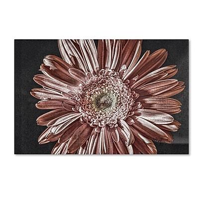 Trademark Fine Art Lois Bryan 'Silvery Pink' 12 x 19 (LBR0283-C1219GG)
