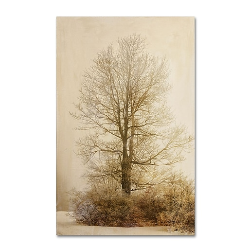 Trademark Fine Art Lois Bryan 'Tan Tones in the Fog'  12 x 19 (LBR0286-C1219GG)