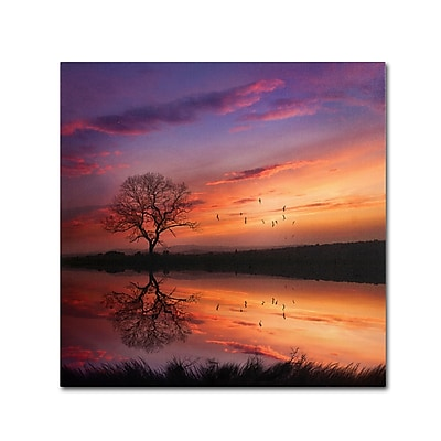 Trademark Fine Art Philippe Sainte-Laudy 'Dream Bigger' 24 x 24 (PSL0340-C2424GG)