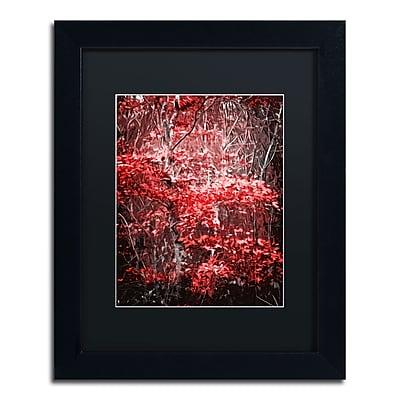 Trademark Fine Art Philippe Sainte-Laudy 'Hope Leaves' 11 x 14 (886511661837)