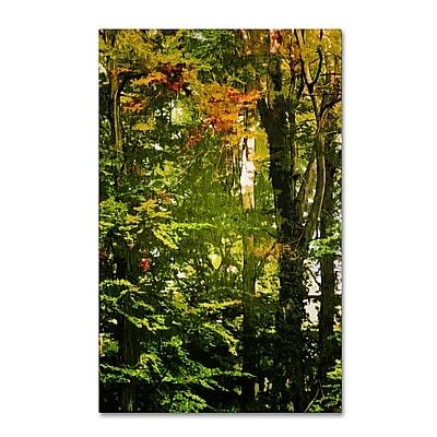 Trademark Fine Art Philippe Sainte-Laudy 'Last Season Green' 16 x 24 (PSL0389-C1624GG)