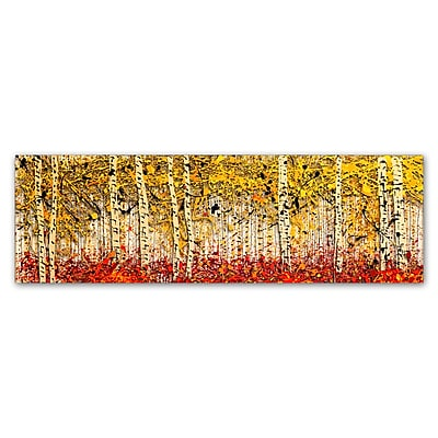 Trademark Fine Art Roderick Stevens 'Fall PanorAspens' 8 x 24 (RS1001-C824GG)