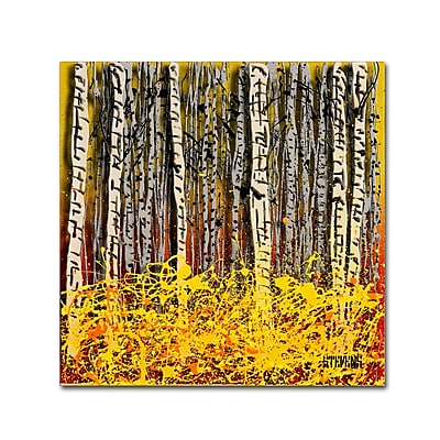 Trademark Fine Art Roderick Stevens 'Fall Aspens' 14 x 14 (RS997-C1414GG)