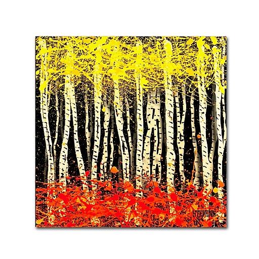 Trademark Fine Art Roderick Stevens 'White Aspens 2'  35 x 35 (RS998-C3535GG)